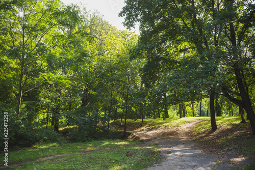 Tuinposter Weg in bos Autumn green forest in daytime sunlight with steps