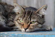 Serious Green-eyed Tabby Cat L...
