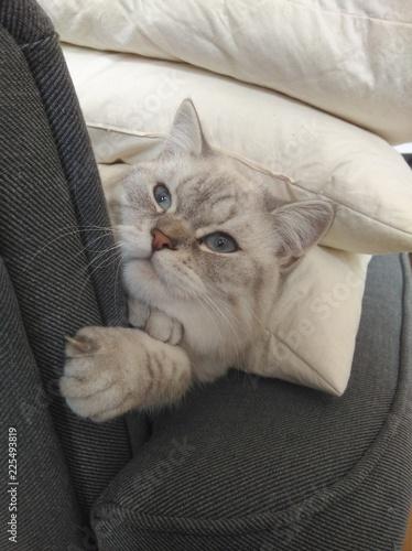 Photographie  vorwitziges Katzenkind