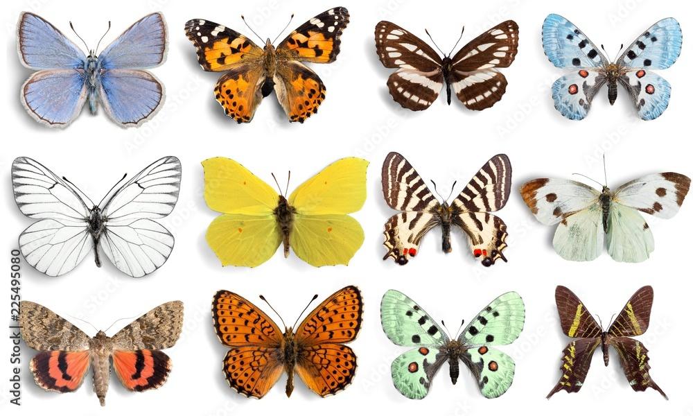 Fototapeta Butterfly.