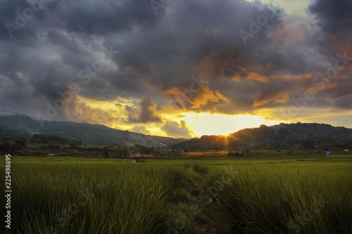 Poster Rijstvelden Rice Field With Sunset Background