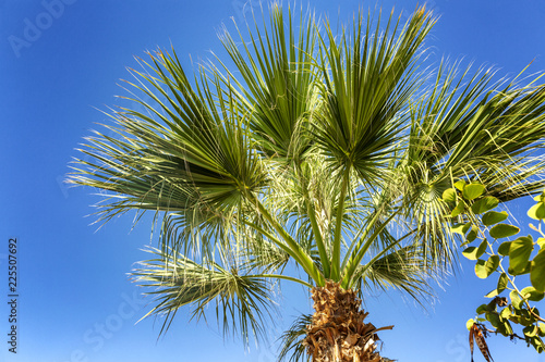 Palm trees in the blue sky, palm trees on the tropical coast, coconut tree, summer tree