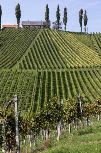Fotobehang Wijngaard scenery vineyard along the south Styrian vine route named suedsteirische weinstrasse in Austria in autumn, Europe