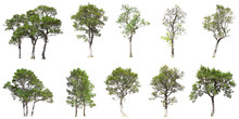 Collection Of Tree Isolated On...
