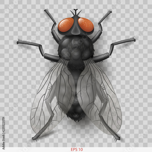 Realistic insect fly. 3D vector graphics. Transparent shadow