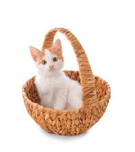 Cute Little Kitten In Wicker B...