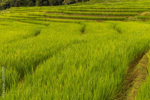 Foto op Aluminium Platteland Small house and rice terraces field at pabongpaing village rice terraces Mae-Jam Chiang mai, Thailand