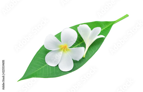 Staande foto Frangipani frangipani or plumeria , tropical flowers with green leaves isolated on white background