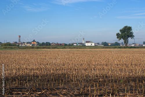 Fotografie, Obraz  campo di grano raccolto