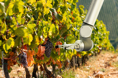 Aufkleber - The robot arm is working in the vineyard. Smart farming and digital agriculture.