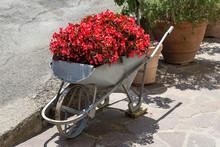 Decorative Flowers In A Wheelb...