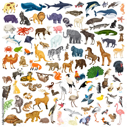 Animals icon set. Cartoon set of animals vector icons for web design