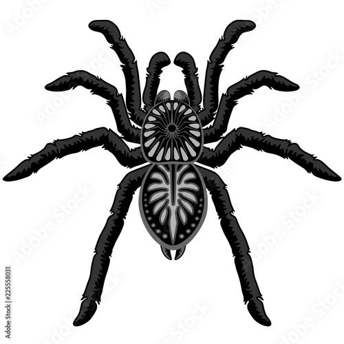 Spoed Foto op Canvas Draw Spider Tarantula Tattoo Style Black and White