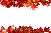 Frame Of Red Autumnal Leaves A...
