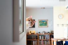 Funny Pussycat Peeking Around ...