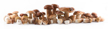 Group Boletus Mushroom Isolate...