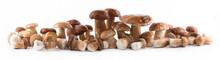 Group Boletus Mushroom Isolated On White Background