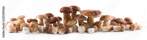 Group boletus mushroom isolated on white background