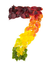 Number Seven Made With Autumn Leaves Isolated On White.mFind Others Symbols In Our Portfolio To Compose Your Own.