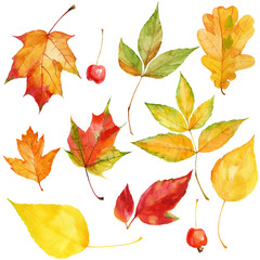Hand drawn watercolor autumnal colorful leaves and berries