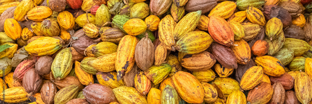 Cacao pods in Sao Tome and Principe, heap of pods of cocoa drying