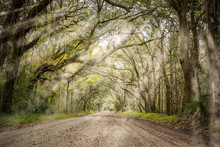 Tree Tunnel At Botany Bay Road In Edisto, South Carolina, USA