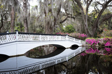 White Bridge Over Still Water In Magnolia Plantation & Gardens. Charleston, South Carolina, USA
