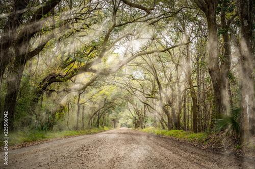 Fototapeta Tree tunnel at Botany bay road in Edisto, South Carolina, USA