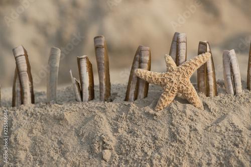 Spoed Foto op Canvas Noordzee Wunderschöner Seestern mit Muscheln am Strand