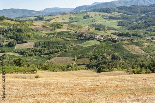 Spoed Foto op Canvas Khaki Green hills in