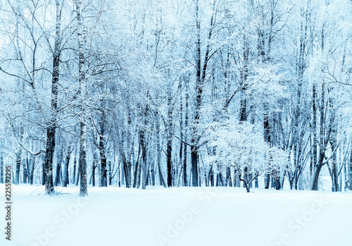 Fotobehang Lichtblauw Winter landscape - forest snowy winter trees in cloudy weather