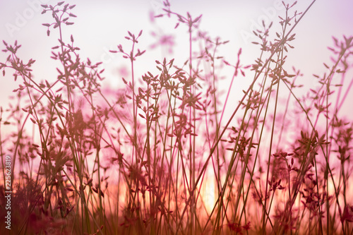 Deurstickers Lichtroze Beautiful Wild flower in sunset background