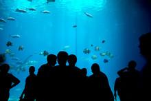 Silhouette People In Acquarium
