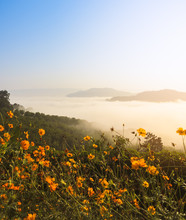 Beautiful Sunrise With Sea Of Fog Over The Mekong River With Wild Mexican Sunflower Foreground In Thailand