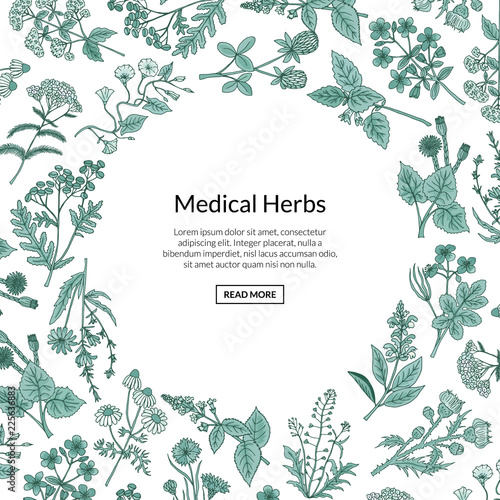 Vector hand drawn medical herbs background with place for text illustration Canvas Print