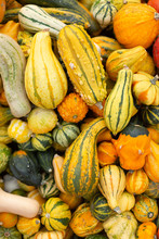 Colorful Ornamental Pumpkins, Gourds And Squashes On An Open Market In The Street