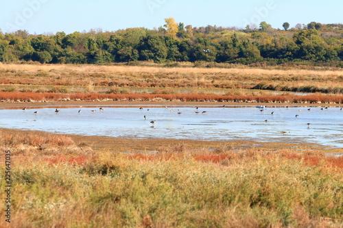 Foto op Canvas Mediterraans Europa Birds in water, Saltplan in Nin, Croatia