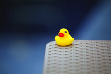 Empty Swimming Pool Toy Duck