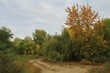 Осень на Зелёном острове.