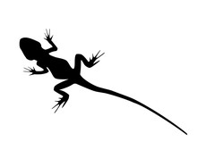 Lizard Wild Animal Black Silhouette Isolated On White Background. Simple Outline Drawn Reptile, Logo Icon Vector Illustration, Eps 10