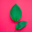 canvas print picture - Tropical leaves on pink background. Minimal nature concept. Flat lay.