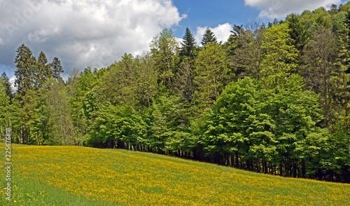 Poster Natuur Baum und Wald
