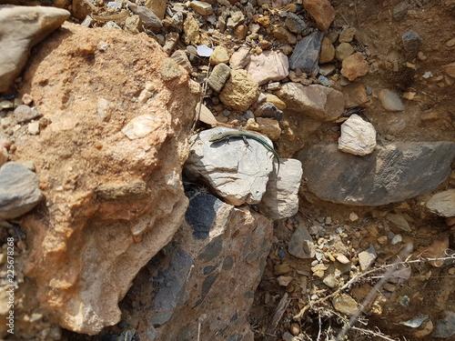 lagartijapequeñita en la naturaleza