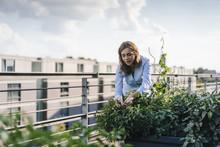 Businesswoman Cultivating Vege...