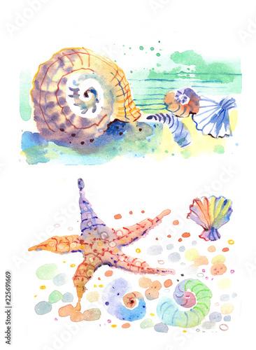 Canvas Print Watercolor seashells, illustration