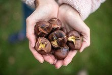 Handful Of Delicious Roasted Chestnuts