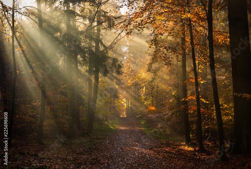 Buchenwald im Herbstlicht