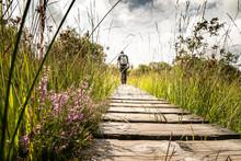 Wanderung Im Hochmoor Hohes Venn