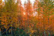Autumn deciduous forest in sunshine in September