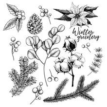 Hand Drawn Christmas Plants. V...